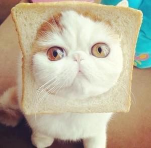 July-26-2012-00-29-18-breadcat