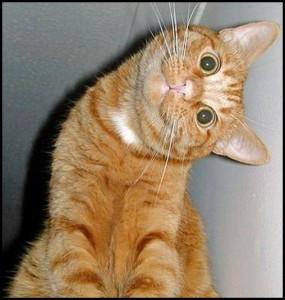 Stupid_cat_3