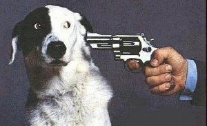 shootdog