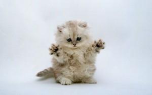 Cute-Kitten-Wallpaper-