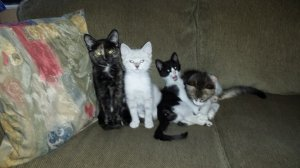 Our kittens