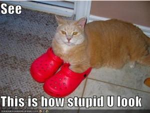 funnypicturesredshoescatstupid