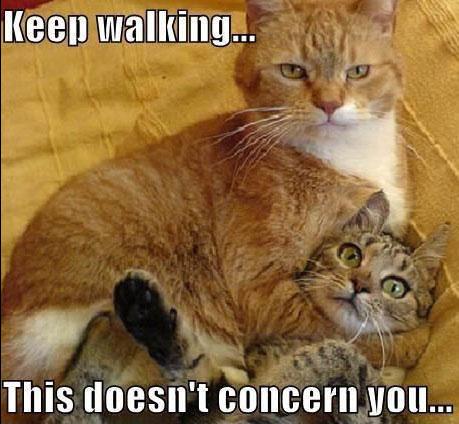 Cat Choke